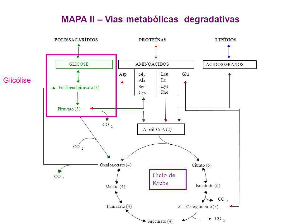 MAPA II – Vias metabólicas degradativas