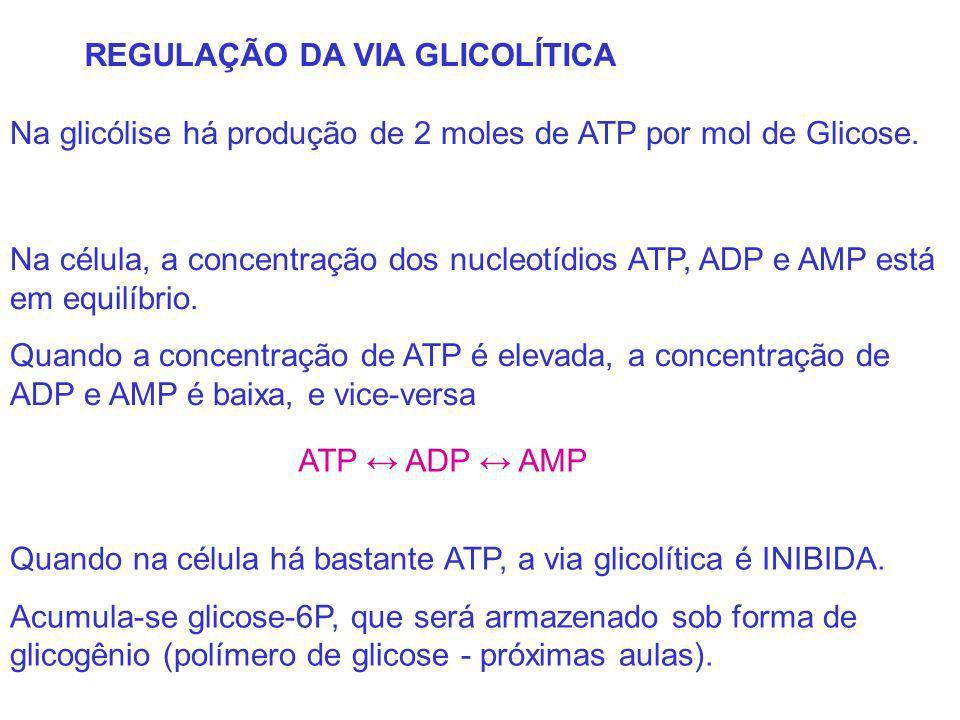 REGULAÇÃO DA VIA GLICOLÍTICA Na glicólise há produção de 2 moles de ATP por mol de Glicose. Quando na célula há bastante ATP, a via glicolítica é INIB