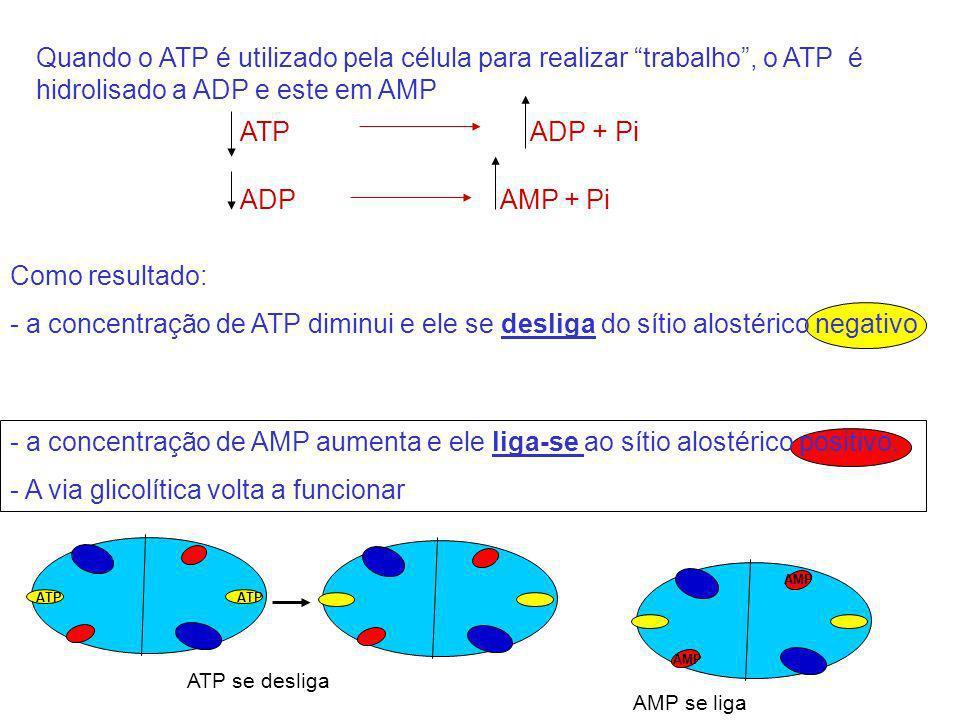 Como resultado: - a concentração de ATP diminui e ele se desliga do sítio alostérico negativo Quando o ATP é utilizado pela célula para realizar traba