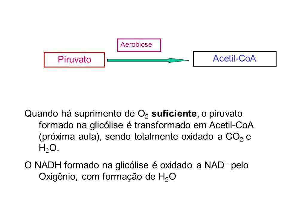 Quando há suprimento de O 2 suficiente, o piruvato formado na glicólise é transformado em Acetil-CoA (próxima aula), sendo totalmente oxidado a CO 2 e