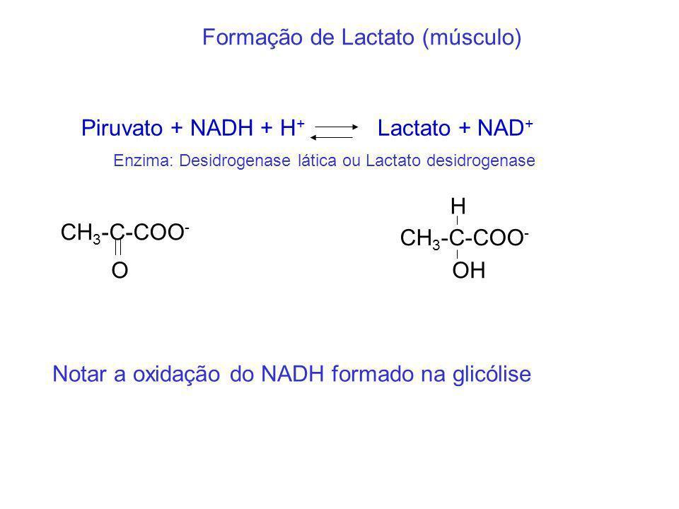 Formação de Lactato (músculo) Piruvato + NADH + H + Lactato + NAD + Enzima: Desidrogenase lática ou Lactato desidrogenase CH 3 -C-COO - O OH H Notar a