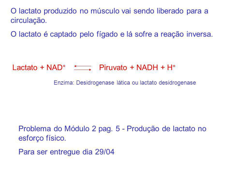 Problema do Módulo 2 pag. 5 - Produção de lactato no esforço físico. Para ser entregue dia 29/04 Lactato + NAD + Piruvato + NADH + H + Enzima: Desidro