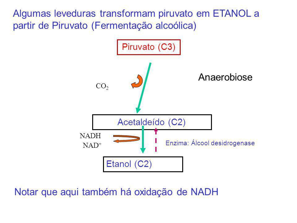 Piruvato (C3) Acetaldeído (C2) CO 2 Etanol (C2) NADH NAD + Algumas leveduras transformam piruvato em ETANOL a partir de Piruvato (Fermentação alcoólic