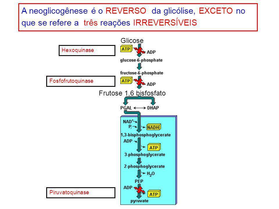 Hexoquinase Fosfofrutoquinase Piruvatoquinase Glicose Frutose 1,6 bisfosfato A neoglicogênese é o REVERSO da glicólise, EXCETO no que se refere a três