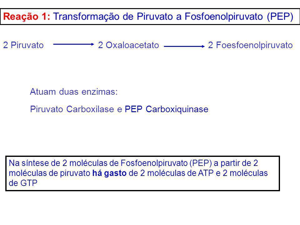 Reação 1: Transformação de Piruvato a Fosfoenolpiruvato (PEP) Na síntese de 2 moléculas de Fosfoenolpiruvato (PEP) a partir de 2 moléculas de piruvato