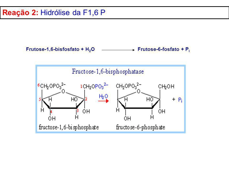 Frutose-1,6-bisfosfato + H 2 O Frutose-6-fosfato + P i Reação 2: Hidrólise da F1,6 P