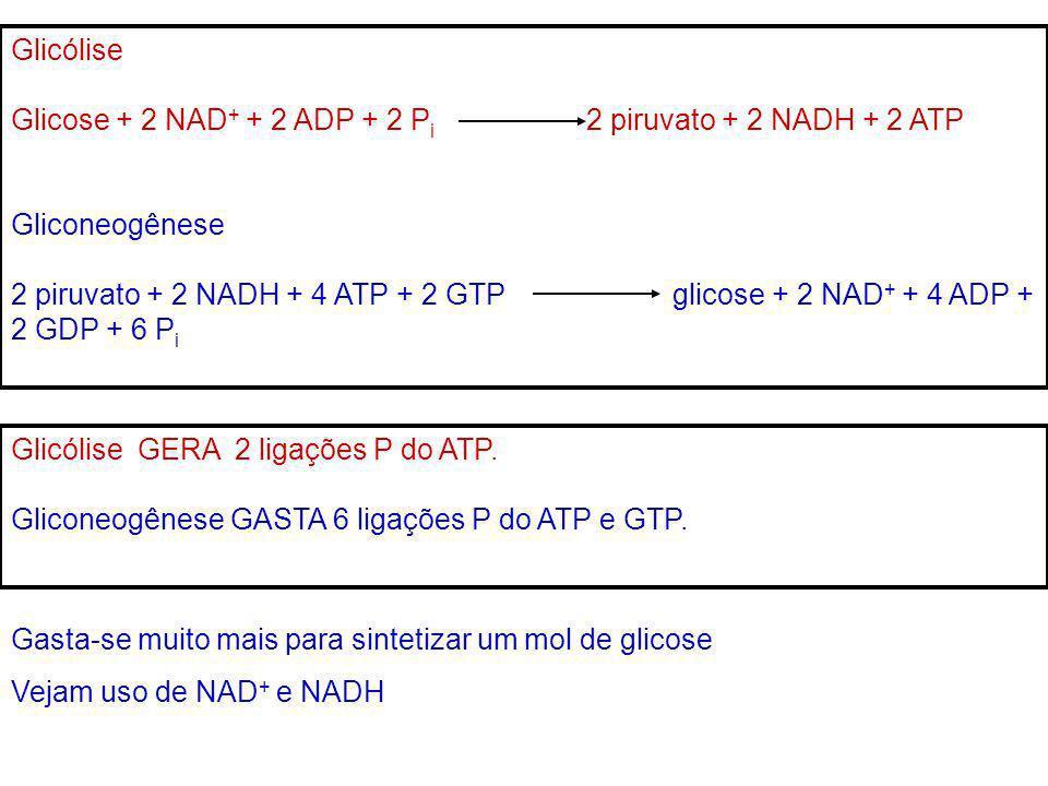 Glicólise Glicose + 2 NAD + + 2 ADP + 2 P i 2 piruvato + 2 NADH + 2 ATP Gliconeogênese 2 piruvato + 2 NADH + 4 ATP + 2 GTP glicose + 2 NAD + + 4 ADP +
