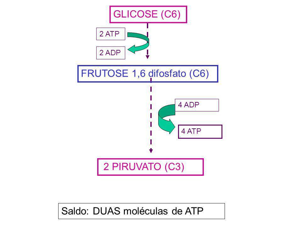 GLICOSE (C6) 2 PIRUVATO (C3) 4 ATP 4 ADP FRUTOSE 1,6 difosfato (C6) 2 ATP 2 ADP Saldo: DUAS moléculas de ATP