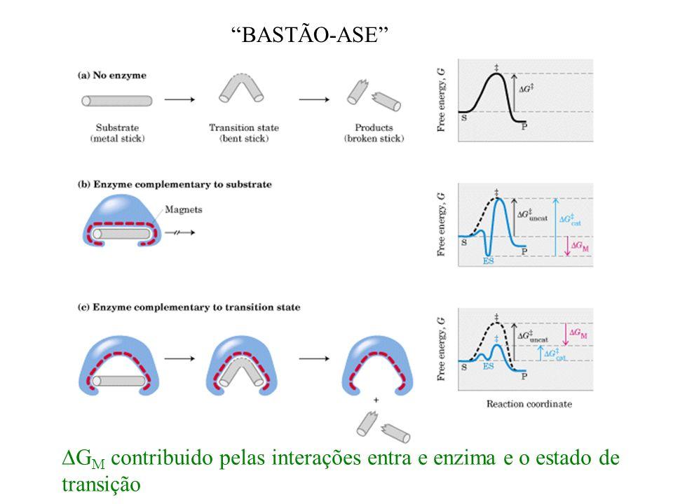 BASTÃO-ASE G M contribuido pelas interações entra e enzima e o estado de transição