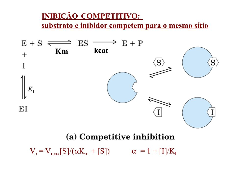 = 1 + [I]/K I V o = V max [S]/( K m + [S]) INIBIÇÃO COMPETITIVO: substrato e inibidor competem para o mesmo sítio Km kcat