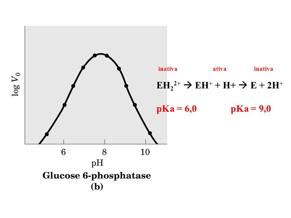 EH 2 2+ EH + + H+ E + 2H + pKa = 6,0 pKa = 9,0 inativa ativa inativa