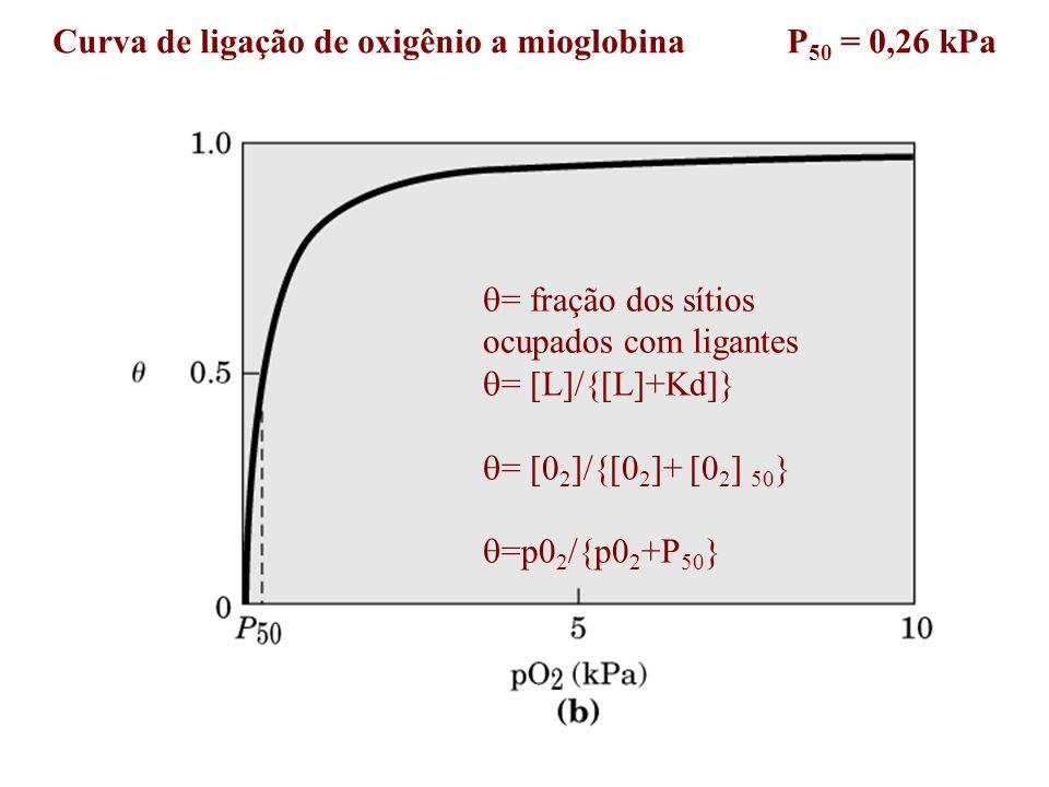 Curva de ligação de oxigênio a mioglobina P 50 = 0,26 kPa = fração dos sítios ocupados com ligantes = [L]/{[L]+Kd]} = [0 2 ]/{[0 2 ]+ [0 2 ] 50 } =p0