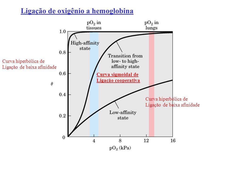 Curva hiperbólica de Ligação de baixa afinidade Curva hiperbólica de Ligação de baixa afinidade Curva sigmoidal de Ligação cooperativa Ligação de oxig