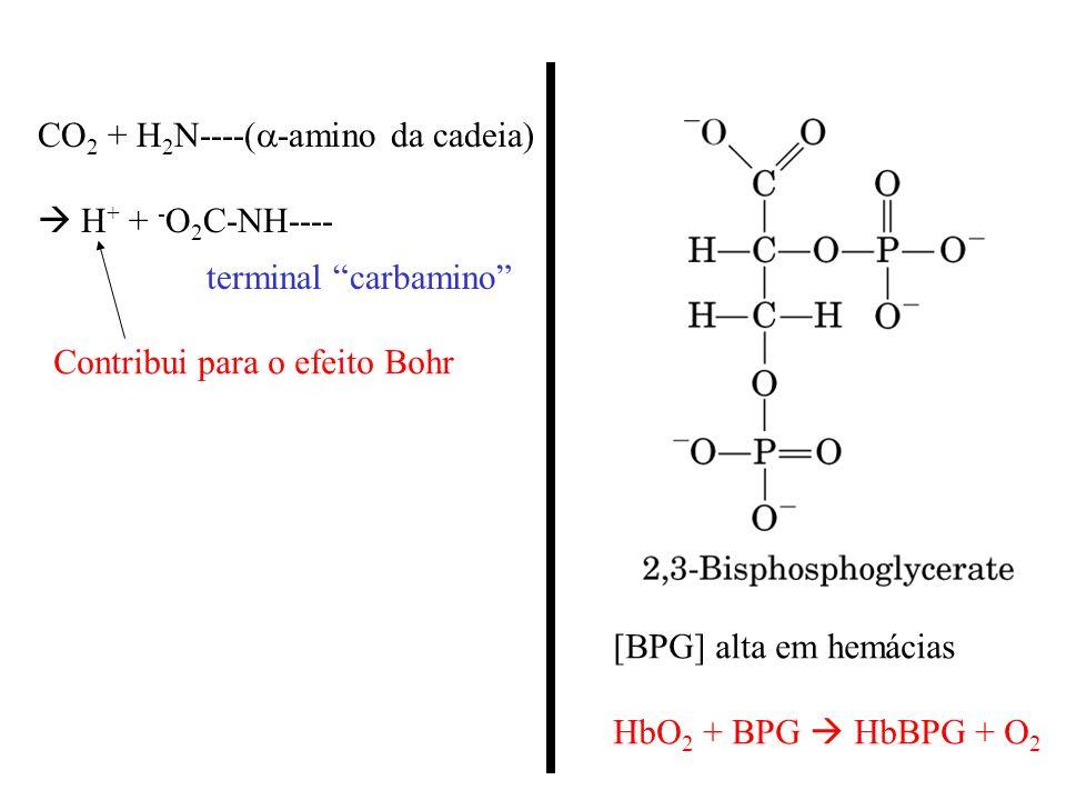 CO 2 + H 2 N----( -amino da cadeia) H + + - O 2 C-NH---- Contribui para o efeito Bohr terminal carbamino [BPG] alta em hemácias HbO 2 + BPG HbBPG + O