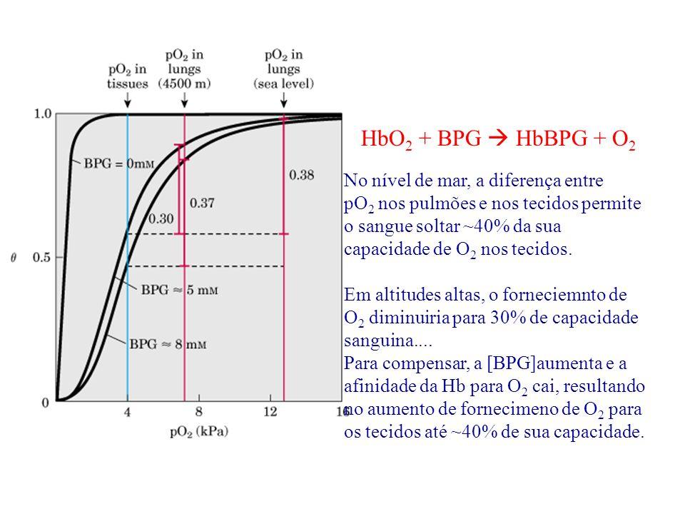 No nível de mar, a diferença entre pO 2 nos pulmões e nos tecidos permite o sangue soltar ~40% da sua capacidade de O 2 nos tecidos. Em altitudes alta