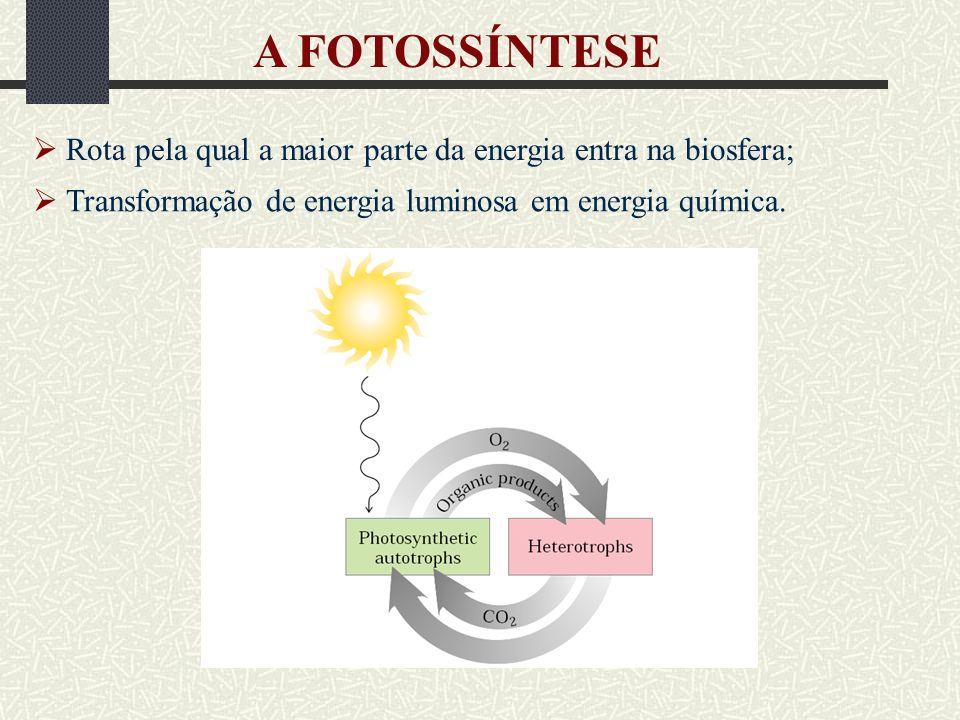 Dissipação por calor REAÇÕES LUMINOSAS Clorofila no estado excitado Reage com O 2 Oxigênio singleto ( 1 O 2 *) Carotenóides Estado excitado decai ao inicial Calor Quenching não-fotoquímico Dissipação da excitação da clorofila por processos outros que não a fotoquímica Grande fração da excitações no sistema antena causadas pela iluminação intensa é eliminada por sua conversão em calor