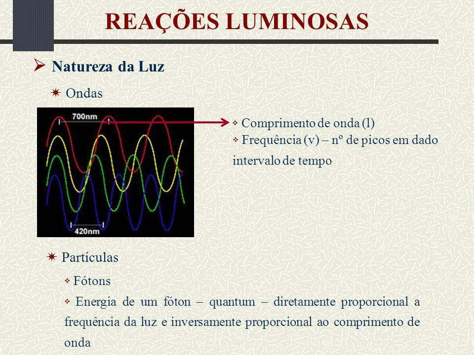 Natureza da Luz REAÇÕES LUMINOSAS Partículas Espectro eletromagnético PAR
