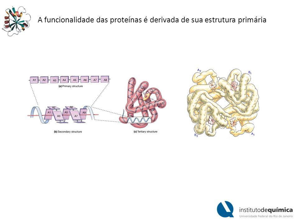 As proteínas são polímeros de aminoácidos.