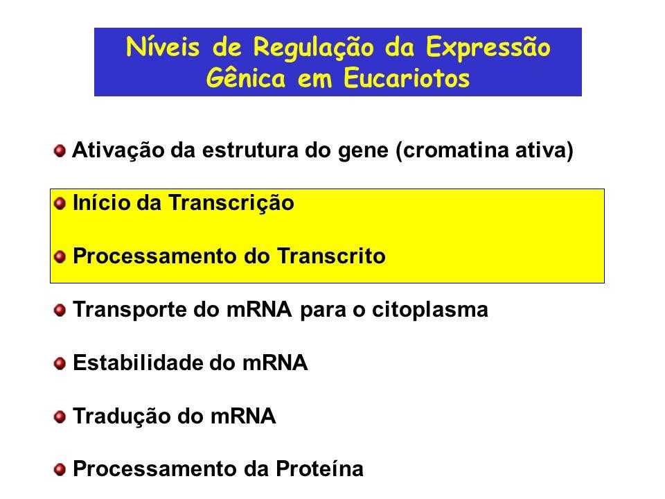 Estrutura típica de um gene transcrito pela RNApol II Promotor Enhancer Gene