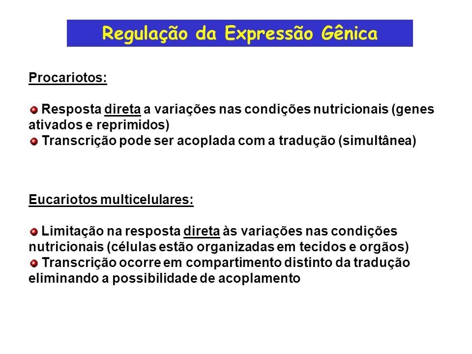 Expressão Gênica em Eucariotos Sinais que regulam a expressão gênica Níveis da resposta Mecanismos da resposta