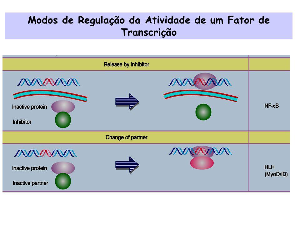 Domínios dos Fatores de Transcrição Domínio de Ativação Domínio conector Domínio de ligação ao DNA