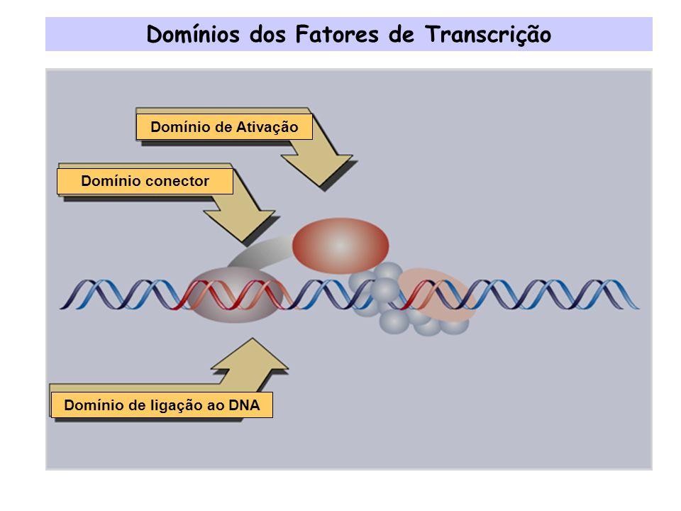 Motivos Estruturais comuns em Fatores de Transcrição Dedo de Zinco Hélice-volta-Hélice Zíper de Leucina