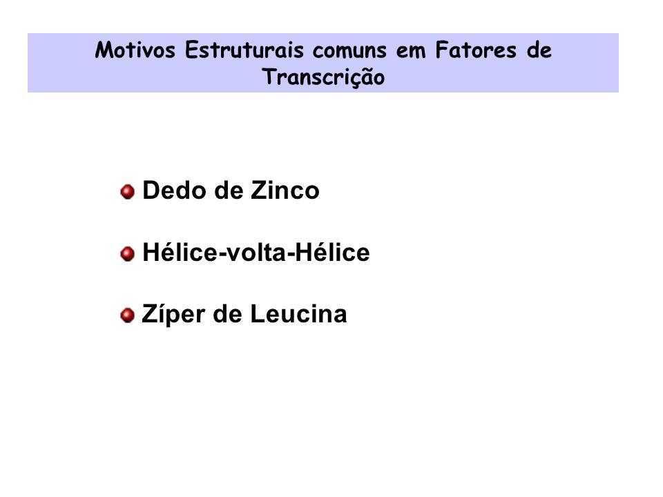 Dedo de Zinco