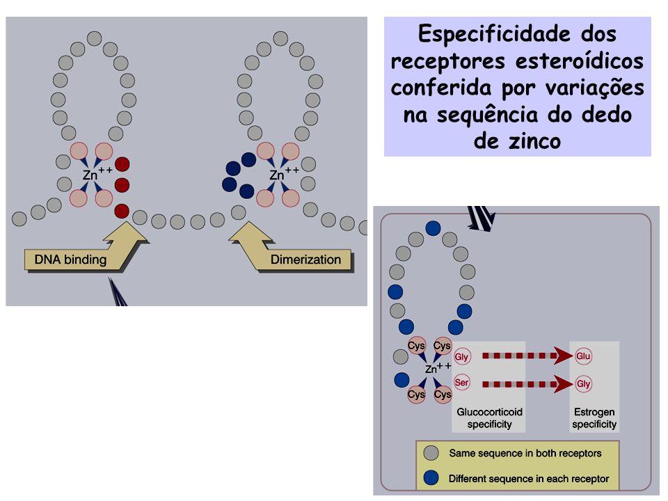 Regulação da expressão de genes por hormônios esteróides