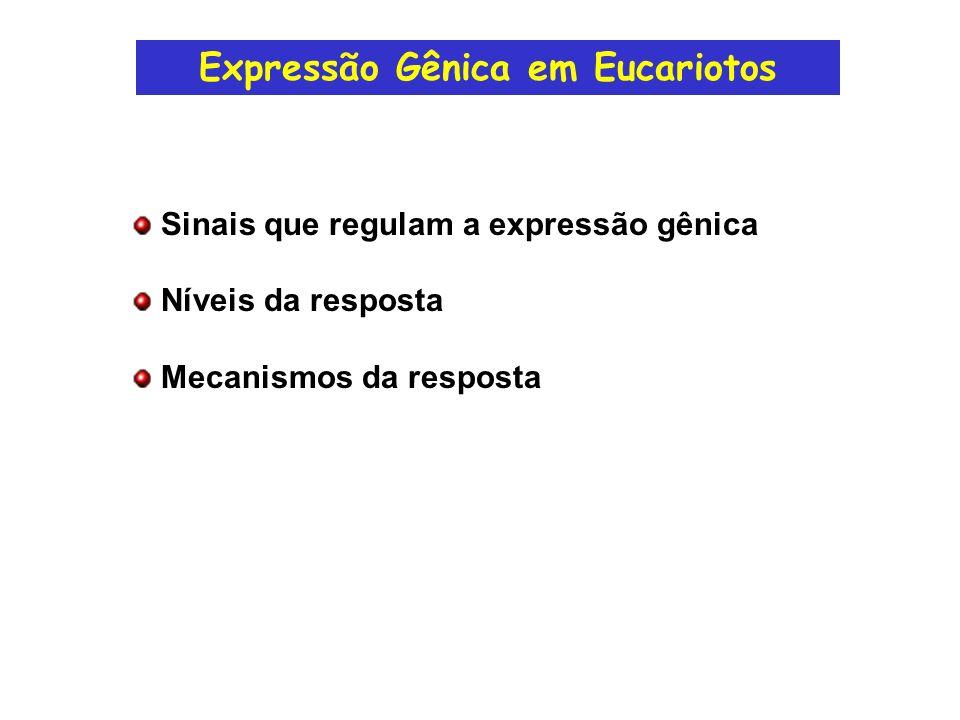 Exemplos de Sinais que Regulam a Expressão Gênica em Eucariotos Hormônios (ex: hormônios esteróides) Fatores de Crescimento e de Diferenciação Celular Contato célula-célula (adesão celular) Alterações nutricionais (resposta é limitada!) Alterações ambientais (ex: choque térmico)