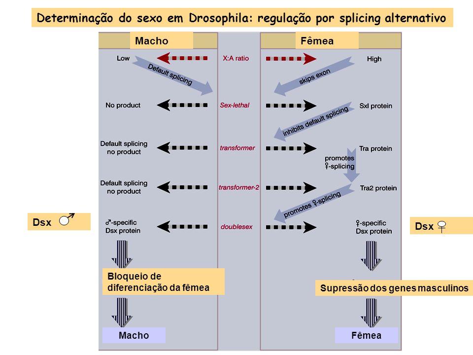 RNApol III utiliza promotores acima e abaixo do início da transcrição