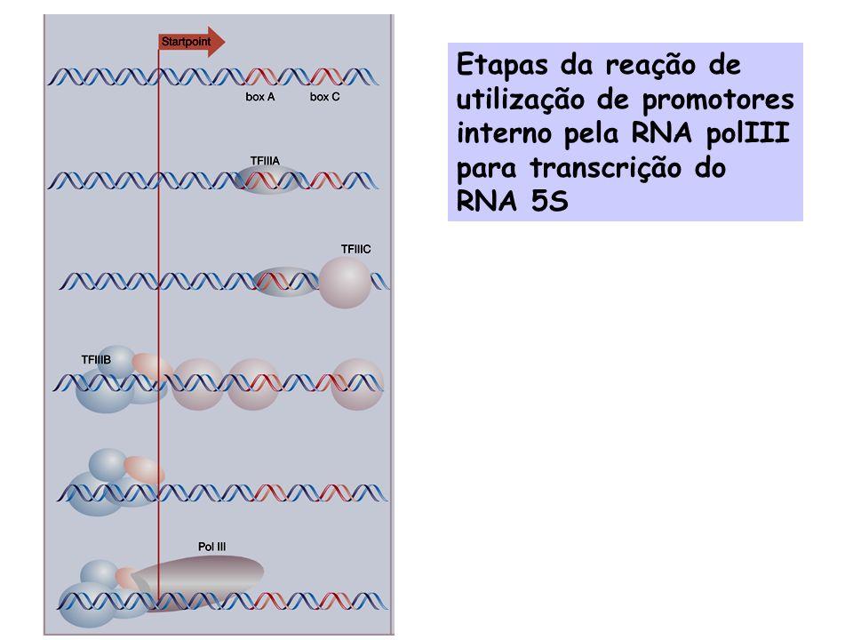 Bibliografia: Genes VII - Benjamin Lewin Lenhinger Principles of Biochemistry (3a.
