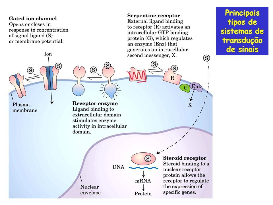 Canais Iônicos: Receptor de acetilcolina Ex: Despolarização e contração muscular