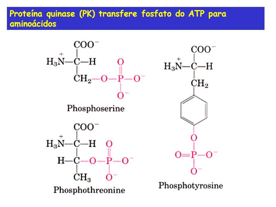 Receptor com atividade enzimática Dimerização e ativação da tirosina quinase e autofosforilação