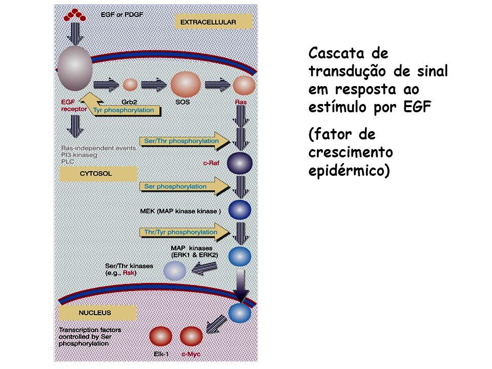 Receptor ligado a proteína G cAMP Ativação da adenilato ciclase