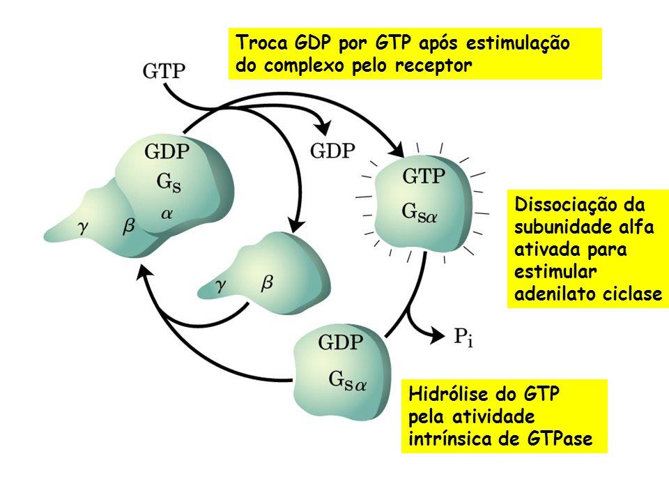 Receptor beta-adrenérgico