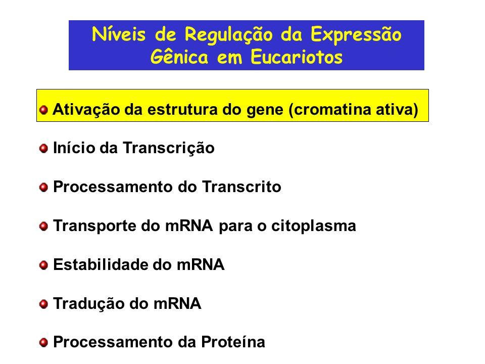 Modelo para Transcrição na Presença de Nucleossomos
