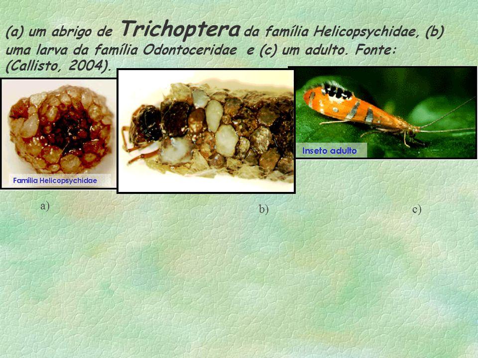 (a) um abrigo de Trichoptera da família Helicopsychidae, (b) uma larva da família Odontoceridae e (c) um adulto. Fonte: (Callisto, 2004). a) b) c)