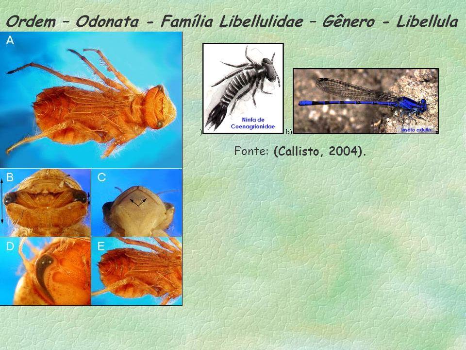 Ordem – Odonata - Família Libellulidae – Gênero - Libellula Fonte: (Callisto, 2004).