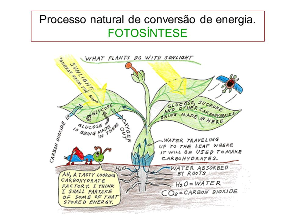 Processo natural de conversão de energia. FOTOSÍNTESE