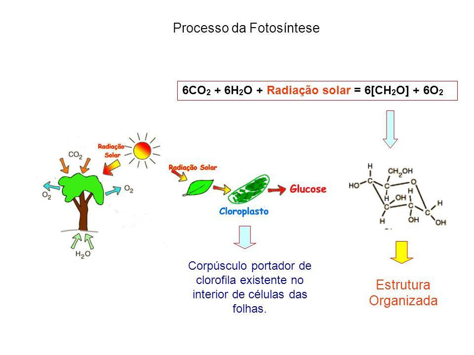 6CO 2 + 6H 2 O + Radiação solar = 6[CH 2 O] + 6O 2 Corpúsculo portador de clorofila existente no interior de células das folhas. Processo da Fotosínte