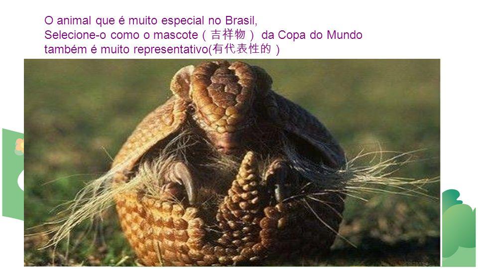 O animal que é muito especial no Brasil, Selecione-o como o mascote da Copa do Mundo também é muito representativo(