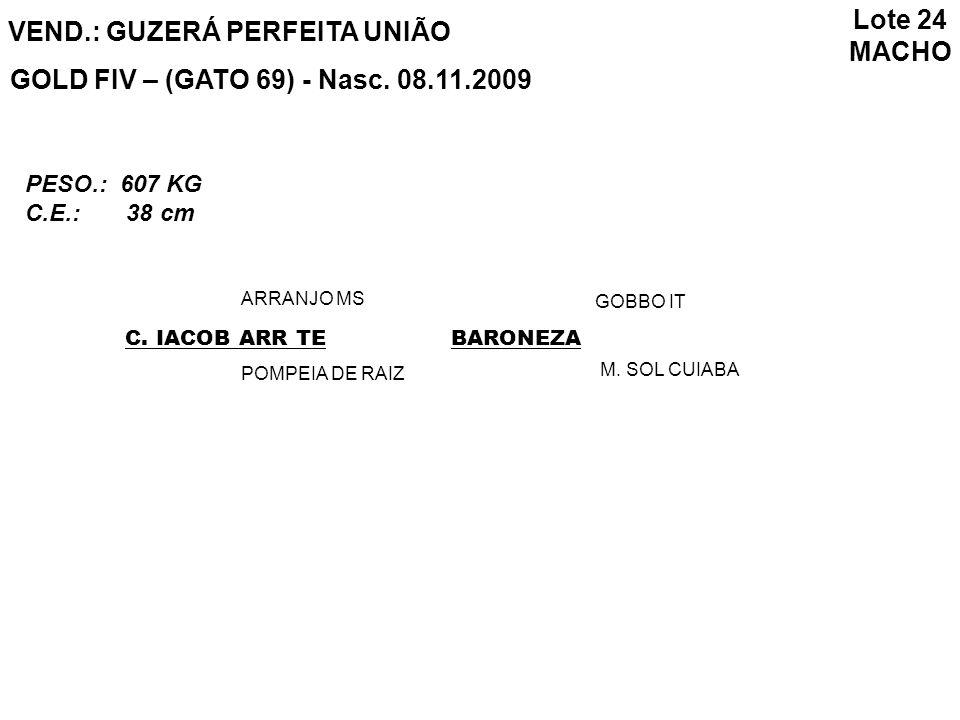 Lote 24 MACHO VEND.: GUZERÁ PERFEITA UNIÃO GOLD FIV – (GATO 69) - Nasc. 08.11.2009 C. IACOB ARR TE ARRANJO MS POMPEIA DE RAIZ BARONEZA GOBBO IT M. SOL