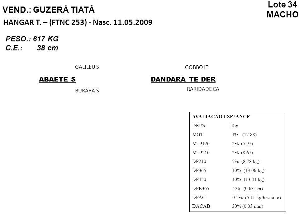 VEND.: GUZERÁ TIATÃ HANGAR T. – (FTNC 253) - Nasc. 11.05.2009 ABAETE S GALILEU S BURARA S DANDARA TE DER GOBBO IT RARIDADE CA AVALIAÇÃO USP / ANCP DEP