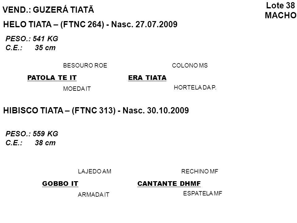 VEND.: GUZERÁ TIATÃ Lote 38 MACHO HELO TIATA – (FTNC 264) - Nasc. 27.07.2009 HIBISCO TIATA – (FTNC 313) - Nasc. 30.10.2009 PATOLA TE IT BESOURO ROE MO