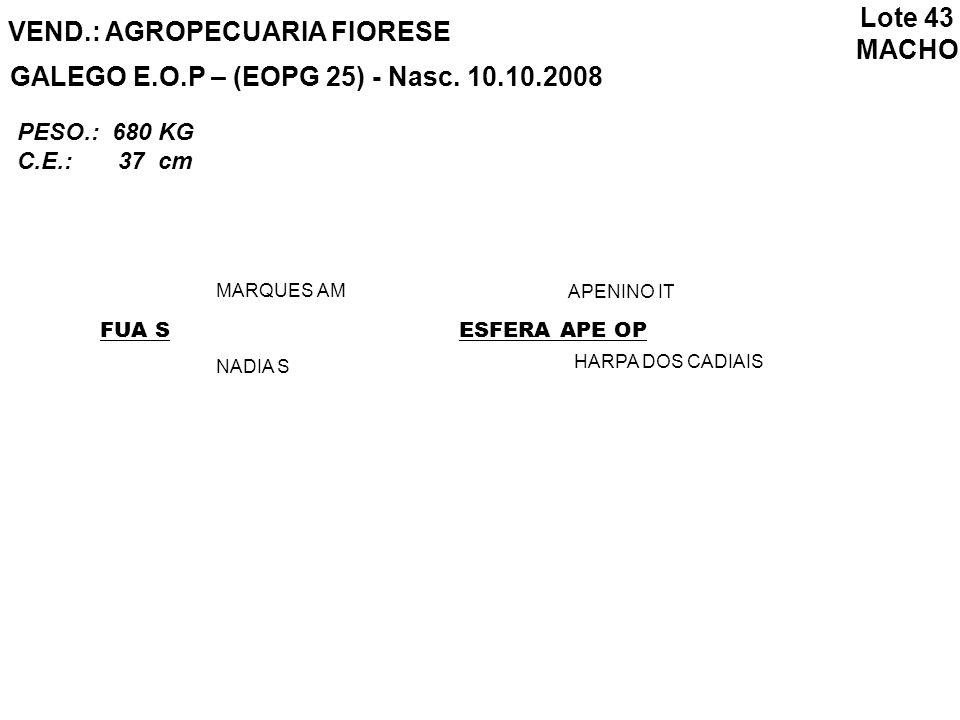 VEND.: AGROPECUARIA FIORESE GALEGO E.O.P – (EOPG 25) - Nasc. 10.10.2008 FUA S MARQUES AM NADIA S ESFERA APE OP APENINO IT HARPA DOS CADIAIS Lote 43 MA