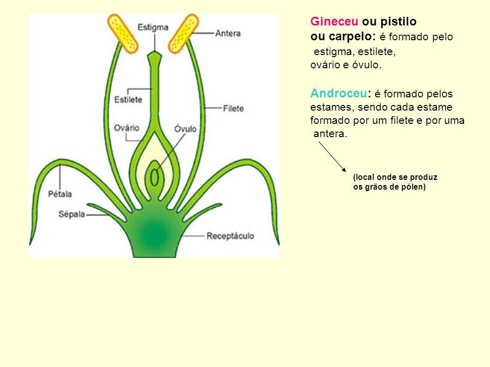 Gineceu ou pistilo ou carpelo: é formado pelo estigma, estilete, ovário e óvulo. Androceu: é formado pelos estames, sendo cada estame formado por um f
