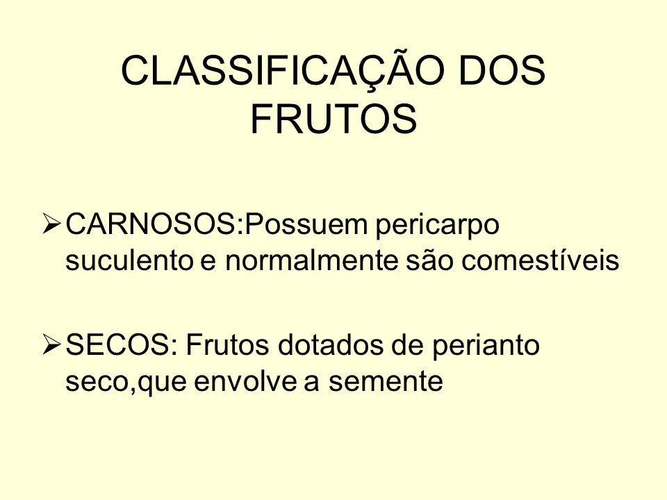 CLASSIFICAÇÃO DOS FRUTOS CARNOSOS:Possuem pericarpo suculento e normalmente são comestíveis SECOS: Frutos dotados de perianto seco,que envolve a semen