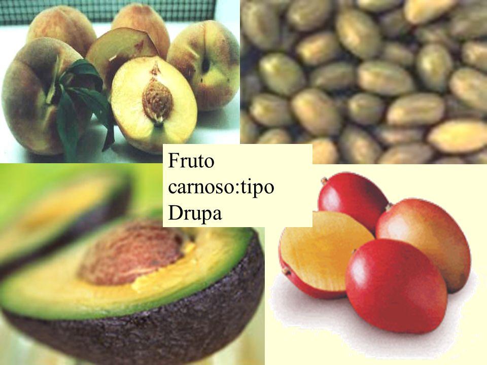Fruto carnoso:tipo Drupa