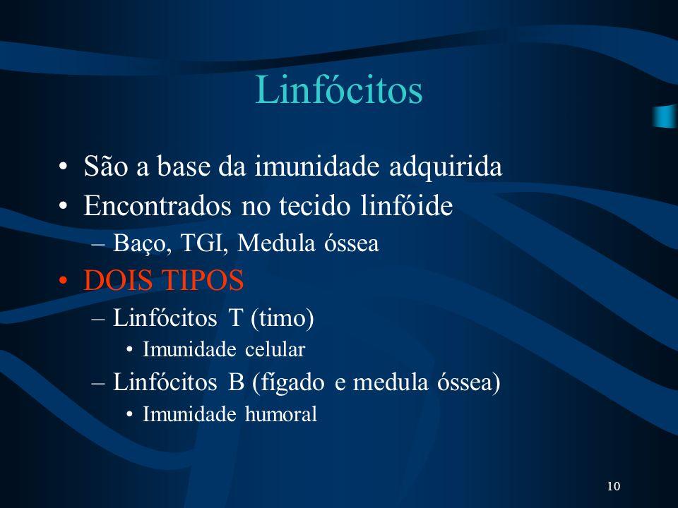 10 Linfócitos São a base da imunidade adquirida Encontrados no tecido linfóide –Baço, TGI, Medula óssea DOIS TIPOS –Linfócitos T (timo) Imunidade celu