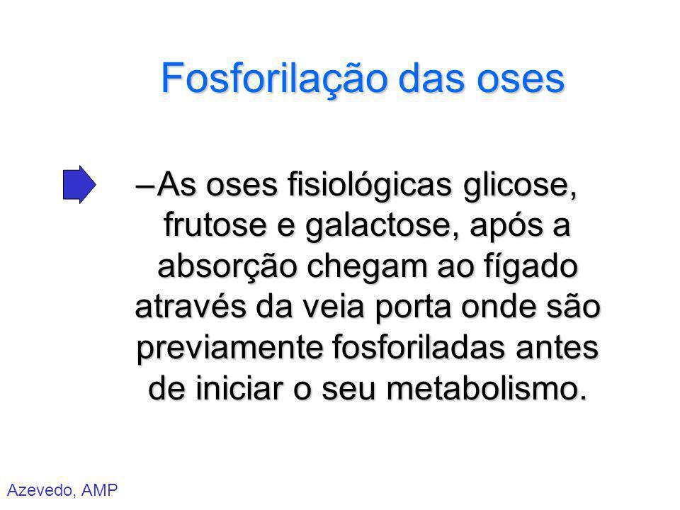 Azevedo, AMP Fosforilação das oses –As oses fisiológicas glicose, frutose e galactose, após a absorção chegam ao fígado através da veia porta onde são